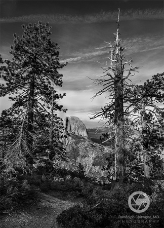 Half Dome Through the Pines